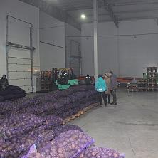 Представители заказчика осматривают хранимый картофель